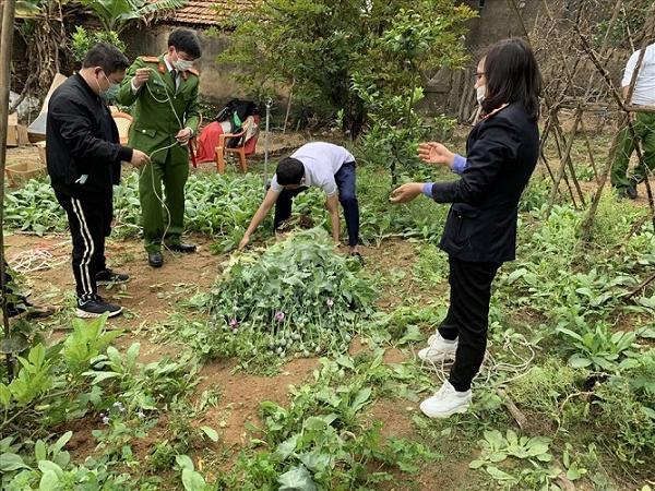 Nở rộ trồng cần sa làm rau nuôi gà lợn, cẩn thận vướng vòng lao lý