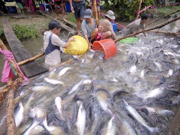 Chu kỳ tăng giá của cá tra bắt đầu, ghi nhận nhiều tín hiệu tích cực