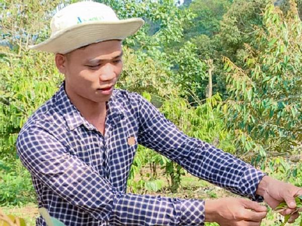 Vườn sầu riêng tưới tự động cho năng suất cao