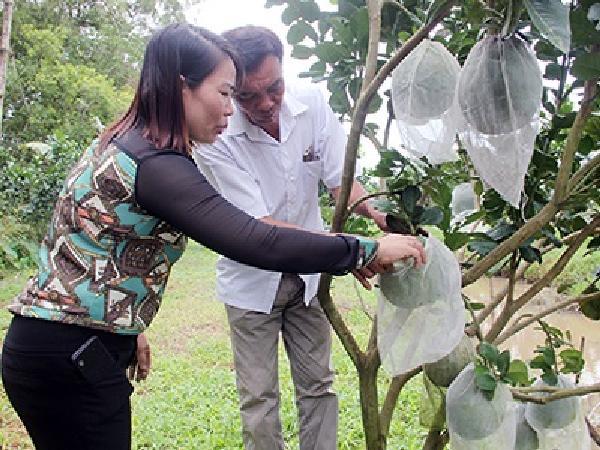 CS-6 mô hình vườn cây ăn trái thích ứng biến đổi khí hậu
