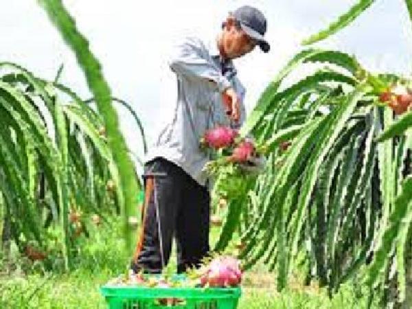 Cấp mã số vùng trồng nông sản