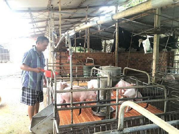 Công an vào cuộc điều tra vụ mất trộm 22 con lợn giống