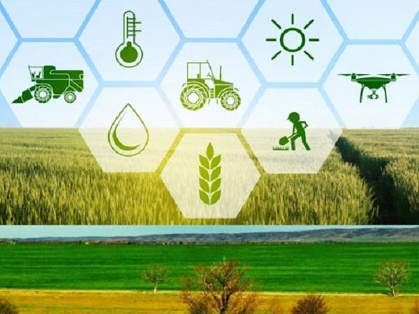 Những mảnh kinh doanh nông nghiệp sinh lời nhất năm 2021, đáng để đầu tư