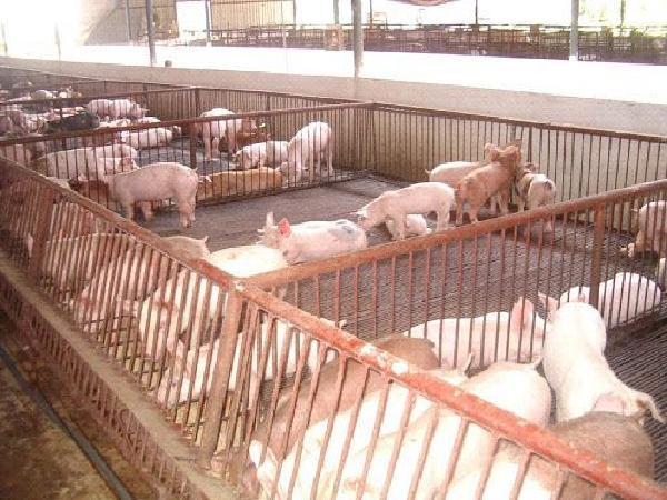 Đề xuất không được phép chăn nuôi ở một số địa phương