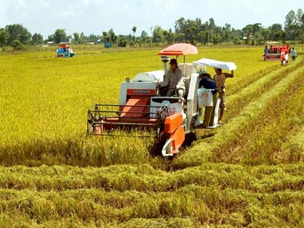Loạn giá lúa ở miền Tây, nông dân chịu cảnh bị ép giá