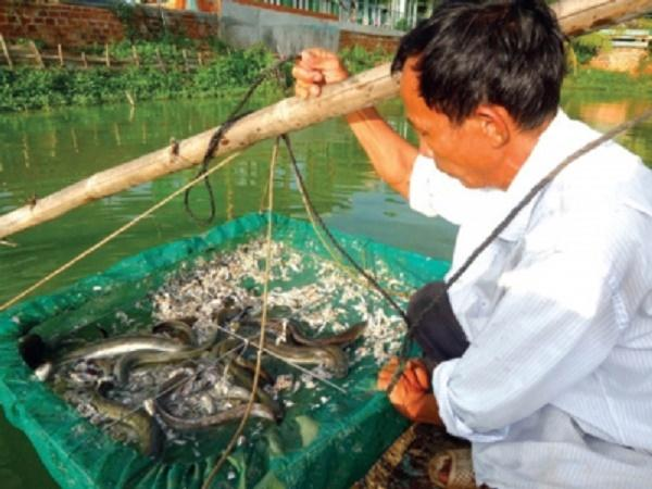 CB-Phòng, trị ký sinh trùng trên cá chình