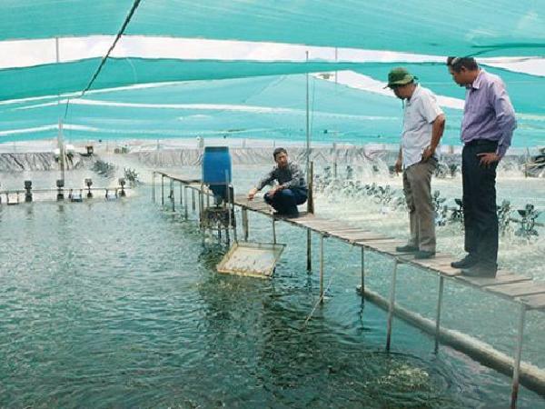 Giá thành cao hơn đối thủ 30% khiến tôm Việt đuối sức cạnh tranh