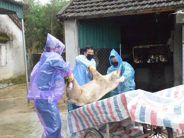Dịch bệnh trên đàn vật nuôi tăng mạnh: Chỉ vì không có cán bộ thú y cấp xã?