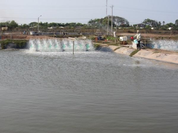 NT-Một số lưu ý khi nuôi thủy sản trong thời tiết nắng nóng