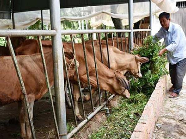N-Các biện pháp cơ bản phòng bệnh cho bò nhốt chuồng