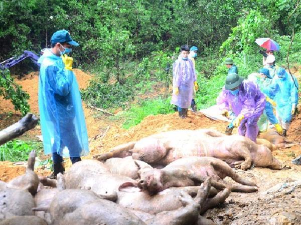 Phát hiện nhiều ổ dịch tả lợn châu Phi mới, Bắc Ninh khẩn trương dập dịch