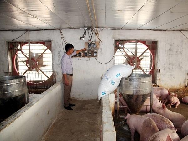 Các hộ chăn nuôi khẩn trương thực hiện biện pháp chống nóng cho vật nuôi