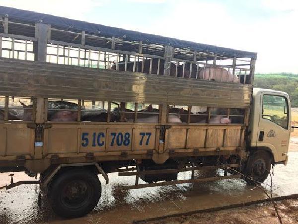 Kêu gọi hạn chế nhập khẩu thịt lợn từ Việt Nam vì lo ngại dịch tả lợn châu Phi
