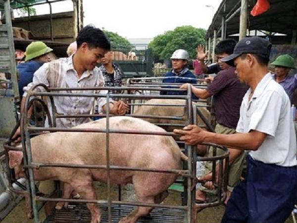 Giá lợn hơi thời gian tới sẽ diễn biến ra sao?