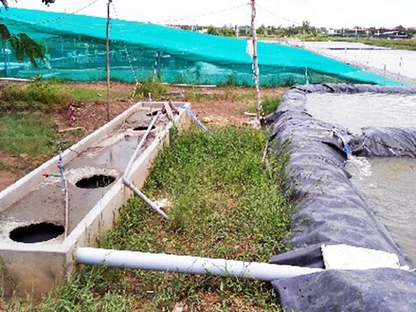XL-Xử lý nước thải nuôi tôm siêu thâm canh bằng biogas