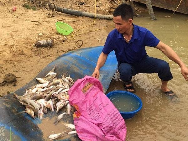 NT-Hạn chế tình trạng cá nuôi chết bất thường