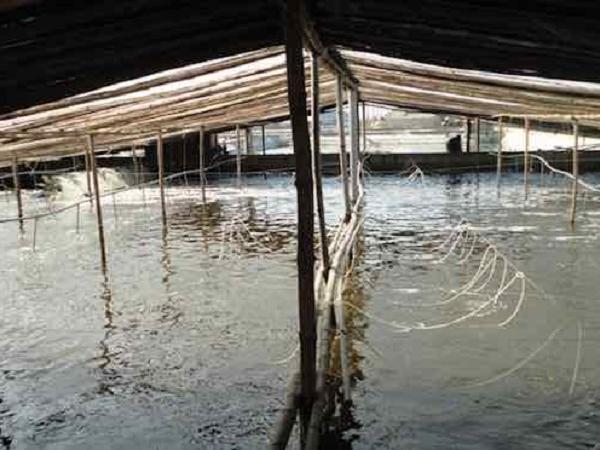 NT-Phòng bệnh tổng hợp cho thủy sản nuôi trong mùa hè