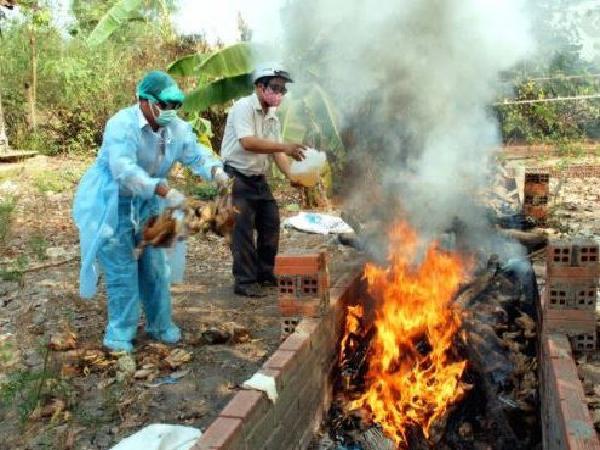 Khẩn trương thực hiện các biện pháp phòng chống cúm gia cầm A/H5N8 xâm nhiễm