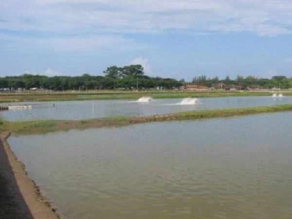NT-Sự cần thiết sử dụng Vitamin C trong nuôi trồng thủy sản