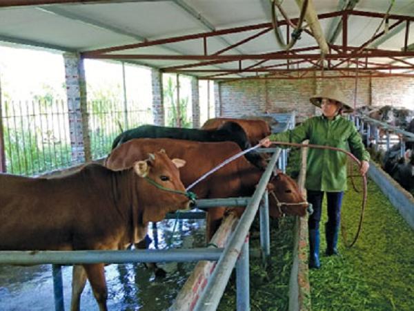 N-Phòng bệnh cho vật nuôi mùa nóng