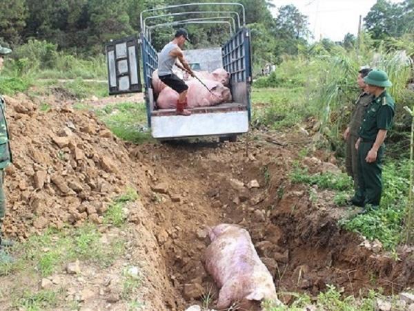 Danh sách các địa phương còn ổ dịch tả lợn châu Phi chưa qua 21 ngày