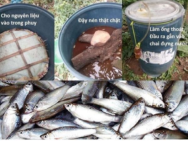 XL-Cách ủ cá làm phân bón cho cây ăn quả