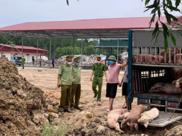 Phạt 7 triệu đồng đối tượng vận chuyển 1,5 tấn lợn thịt mắc bệnh dịch tả lợn châu Phi