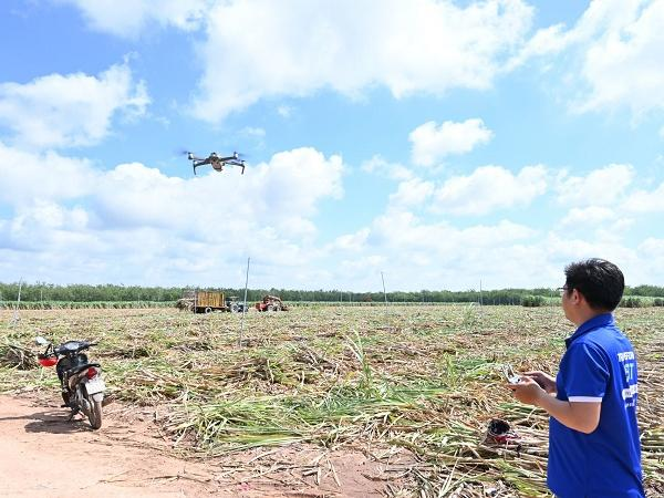 Sử dụng flycam để kiểm soát cánh đồng mía