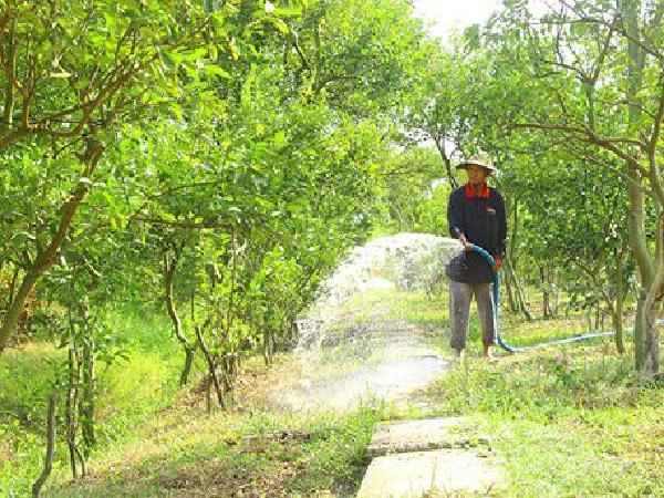 CS-Bảo vệ cây ăn quả trước nắng nóng