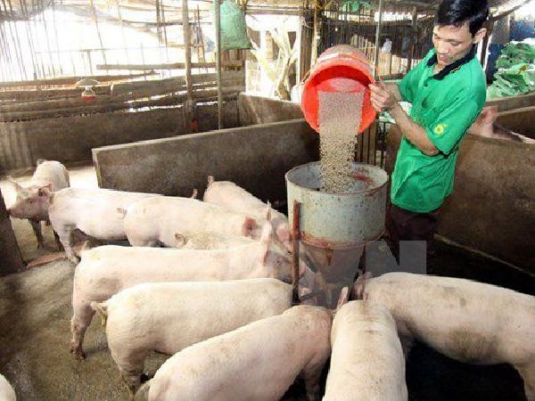 Kiến nghị giảm 50% thuế NK nguyên liệu TĂCN cứu ngành chăn nuôi trong nước