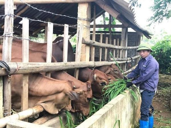 N-Phòng chống dịch bệnh cho vật nuôi mùa mưa bão