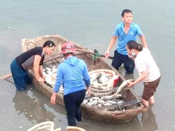 Khẩn trương tìm nguyên nhân khiến hơn 40 tấn cá chết bất thường