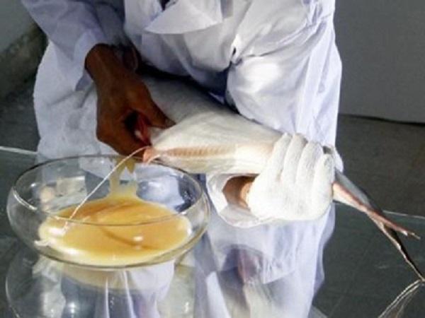 NT-Biện pháp mới giúp cải thiện sức sinh sản cá tra