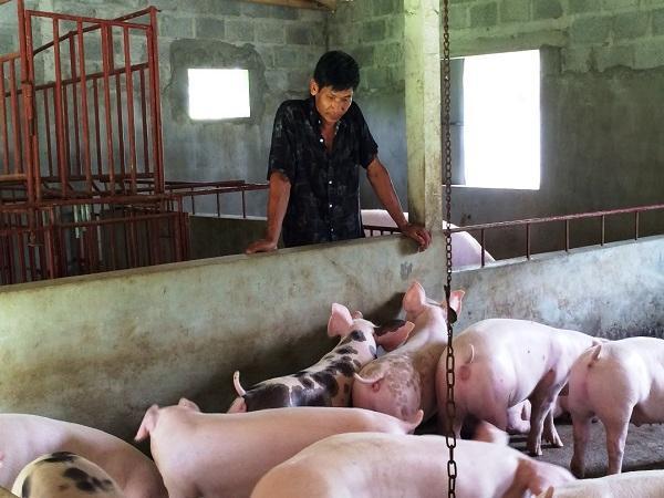 Giá vịt khoang tăng đột biến, giá lợn tiếp tục giảm mạnh