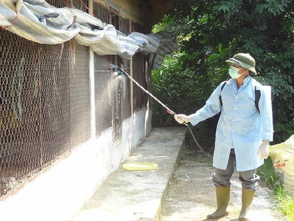 XL-Hướng dẫn sử dụng Vôi, I-ốt, Cloramin để khử trùng trong chăn nuôi