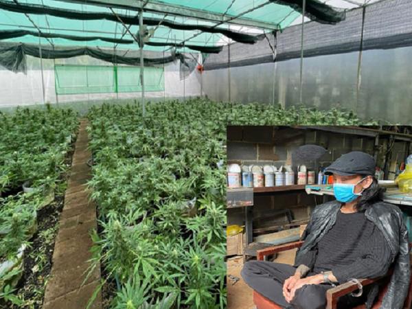 Bỏ làm nông, lên Đắk Lắk mở trang trại trồng cần sa bán online mùa dịch