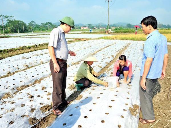 CS-Những điều cần lưu ý khi sử dụng màng phủ nilon cho cây trồng