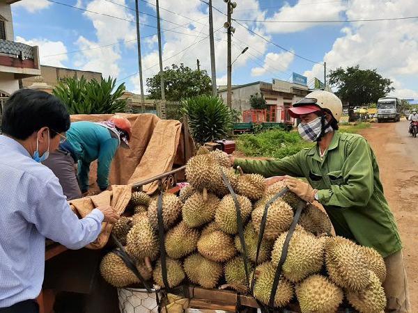 Yêu cầu tạm dừng cấp giấy cho dân đi làm rẫy và mua bán nông sản từ ngày 16/9