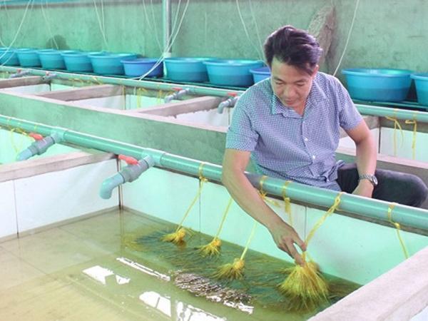 NT-Nuôi lươn đạt tiêu chuẩn xuất khẩu sang Nhật Bản