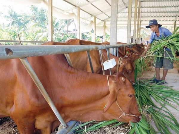 Hợp tác xã, cơ sở nuôi bò công nghệ cao có thể được hỗ trợ 1 tỉ đồng