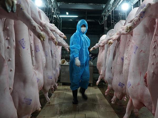 Hàng nghìn cơ sở giết mổ đóng cửa, ngừng hoạt động, giá lợn và gà tiếp tục giảm mạnh