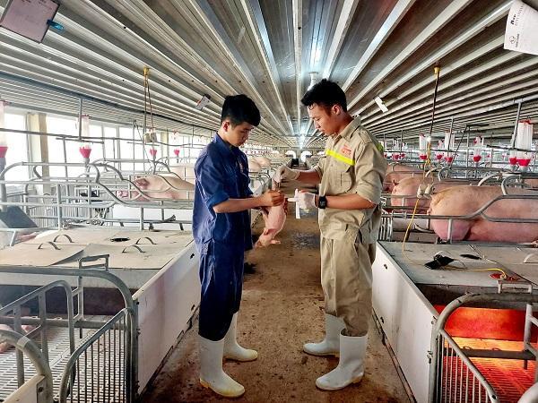 Giá lợn, gà và TĂCN cuối năm nay sẽ ra sao