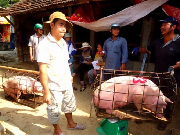 Giá lợn hơi tại các địa phương dứt đà giảm, quay đầu bật tăng trở lại