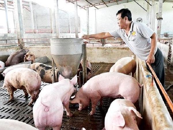 Chính sách hỗ trợ người dân khôi phục chăn nuôi lợn sau dịch bệnh và bão giá
