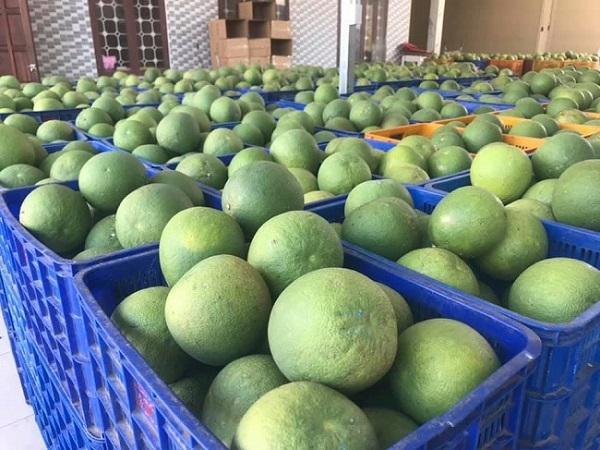 Hai loại nông sản của Việt Nam bị thu hồi vì có chứa chất cấm, có khả năng gây ung thư