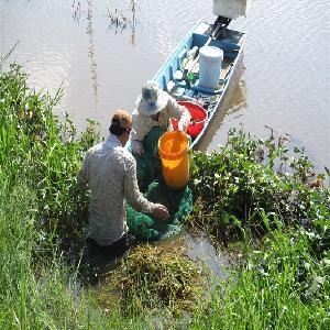 Mùa nước nổi và nghề đắp ụ bẫy lươn ở Đồng Tháp
