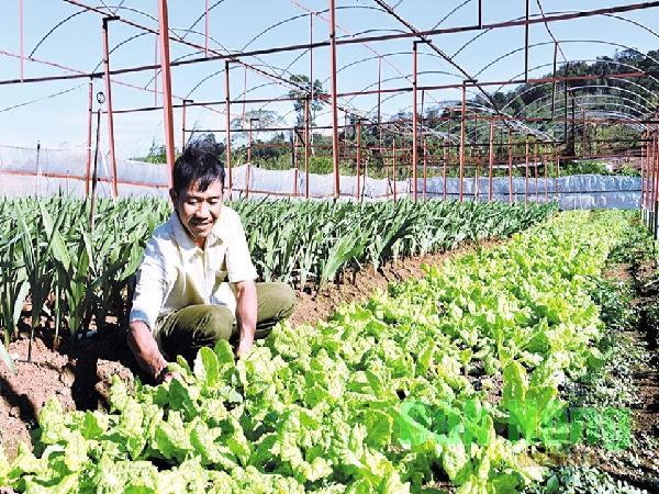 Quy hoạch Vùng nông nghiệp ứng dụng công nghệ cao
