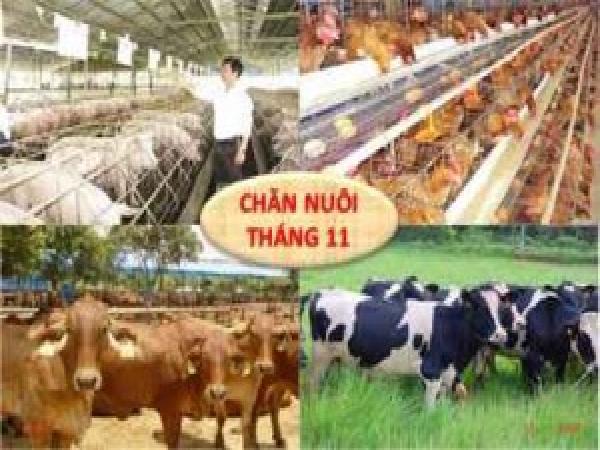 Tình hình chăn nuôi cả nước tháng 11/2017