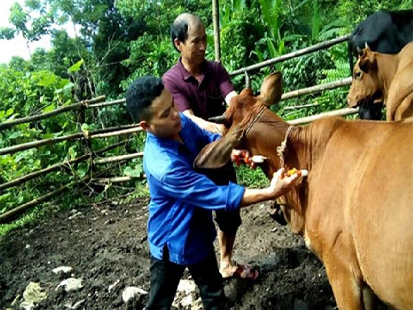 Phòng, chống rét và dịch bệnh cho gia súc, gia cầm