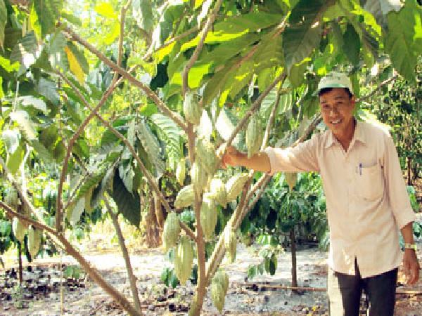CS-Kỹ thuật trồng và chăm sóc ca cao